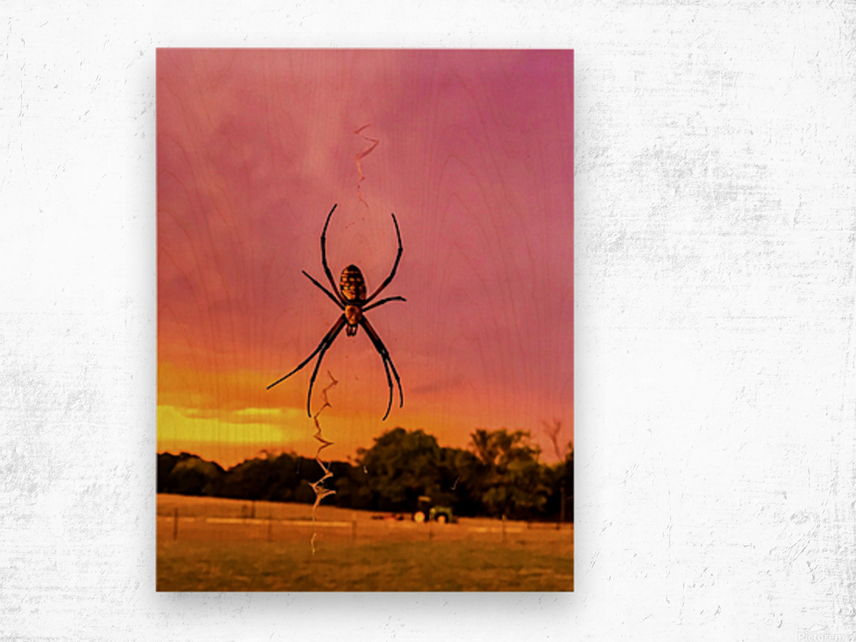 Banana Spider in Cat Spring TX Wood print