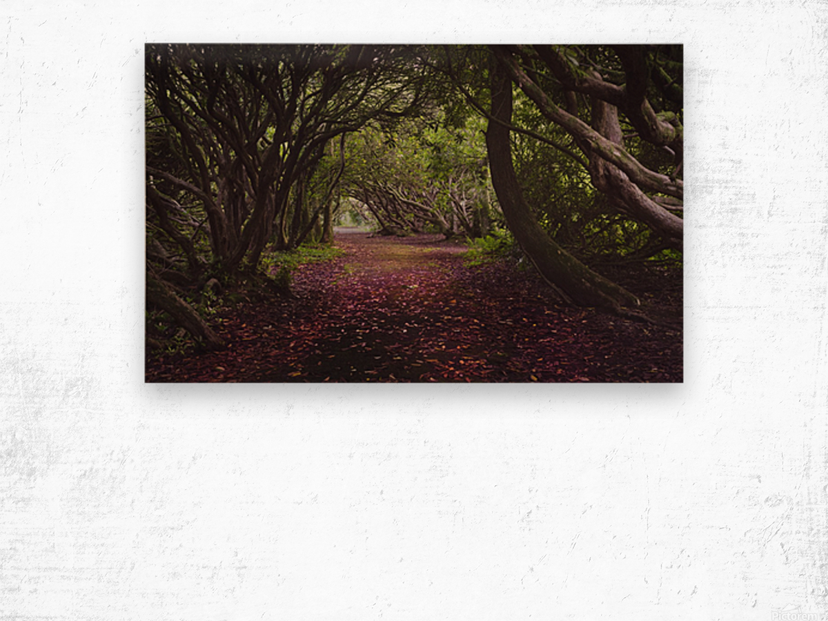 Rhododendron arched walkway Wood print