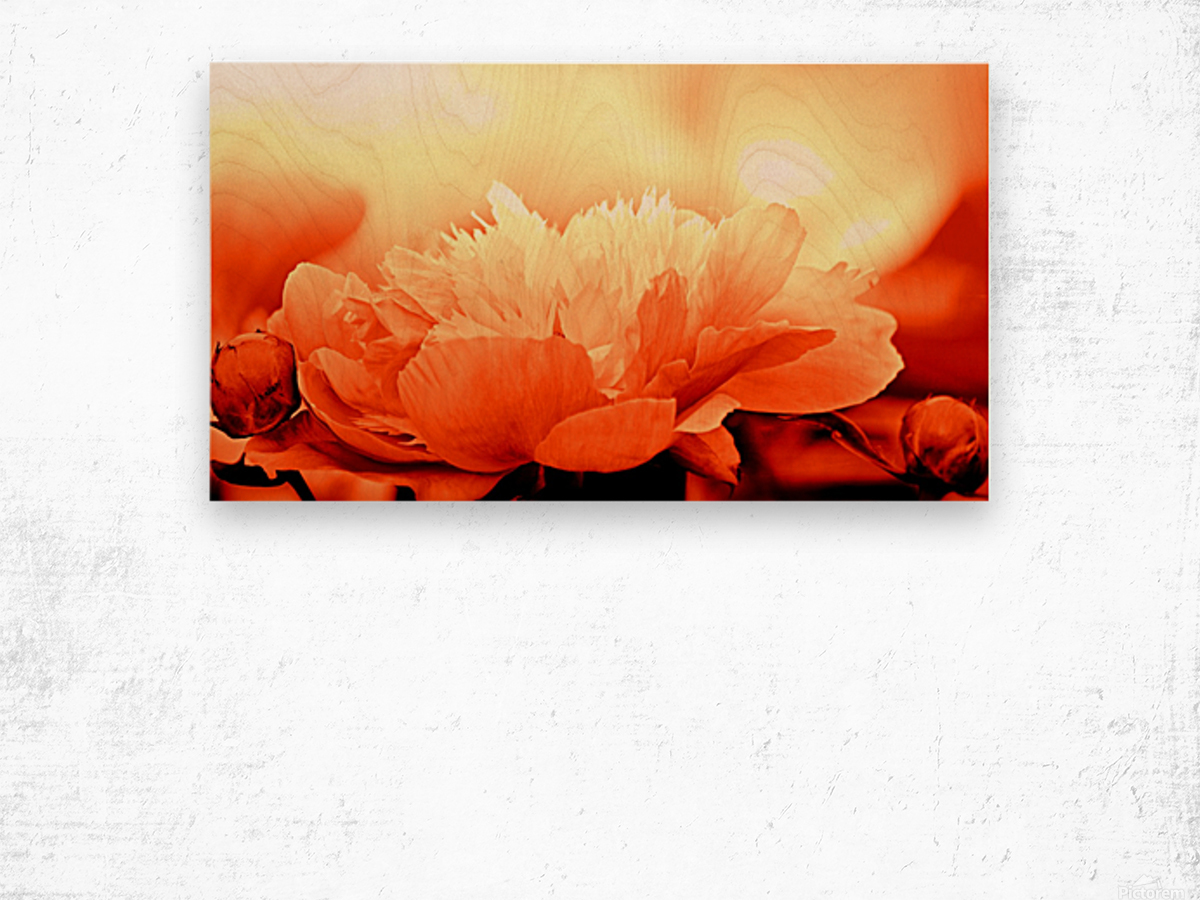 Heavenly Peony Orange Wood print