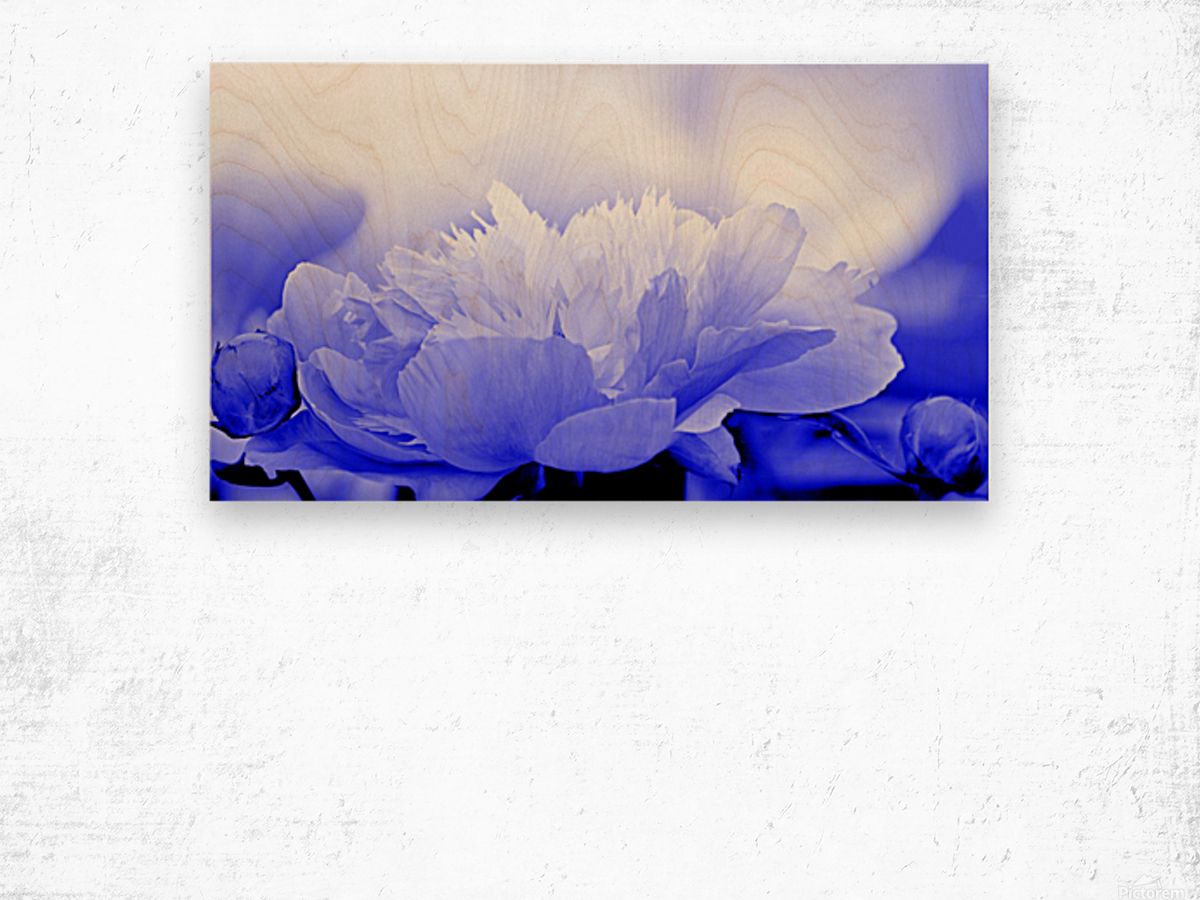 Heavenly Peony Blue Wood print