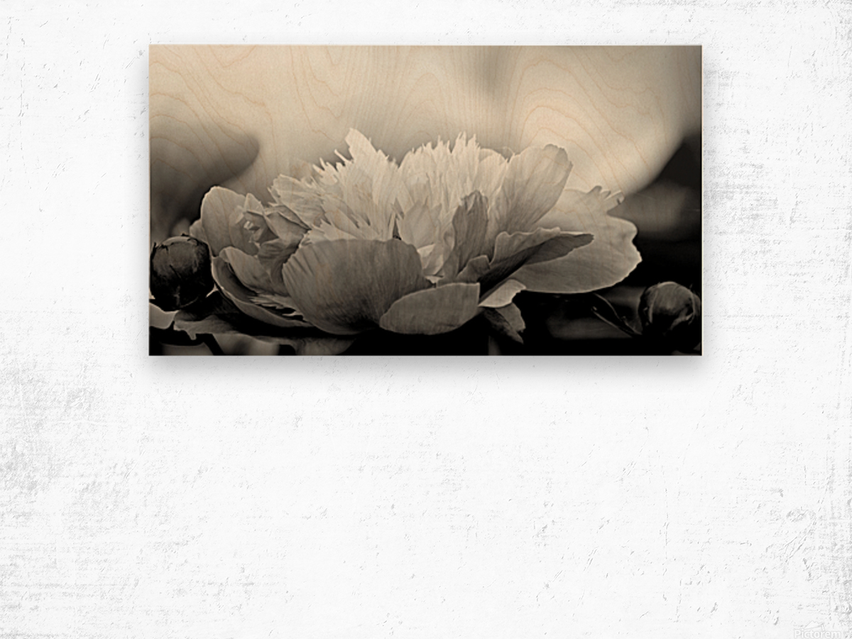 Heavenly Peony Black and White Wood print