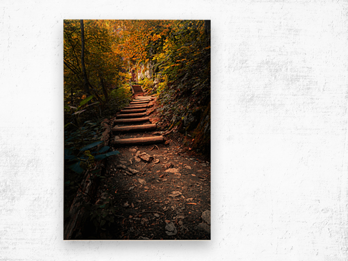 Climbing Colors Wood print