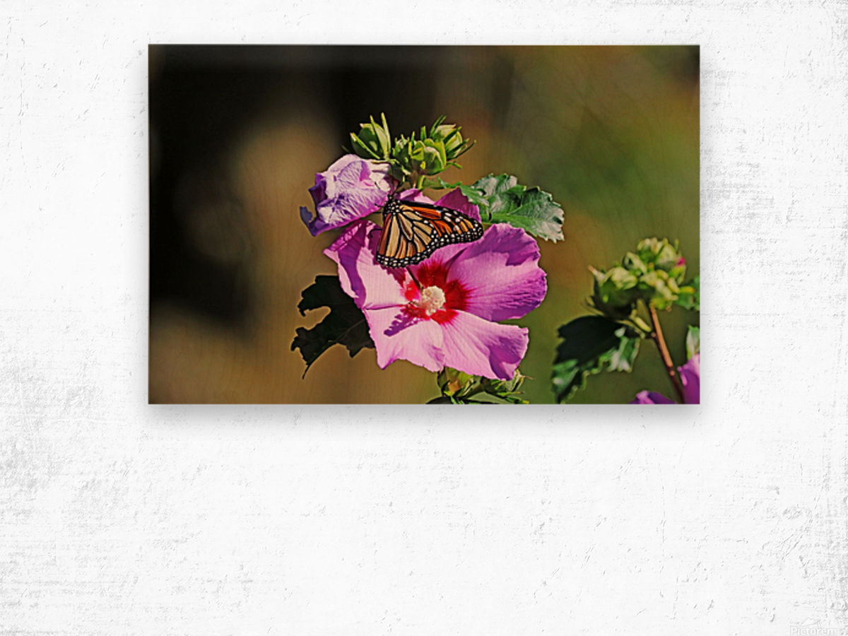Monarch And Rose Of Sharon Wood print