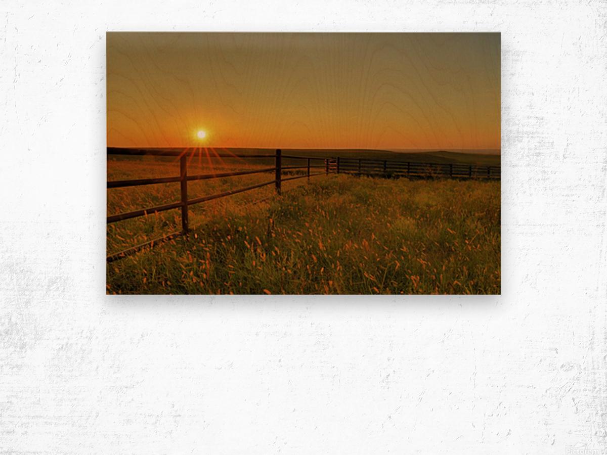 Cattle Pens Morning Sunburst Wood print