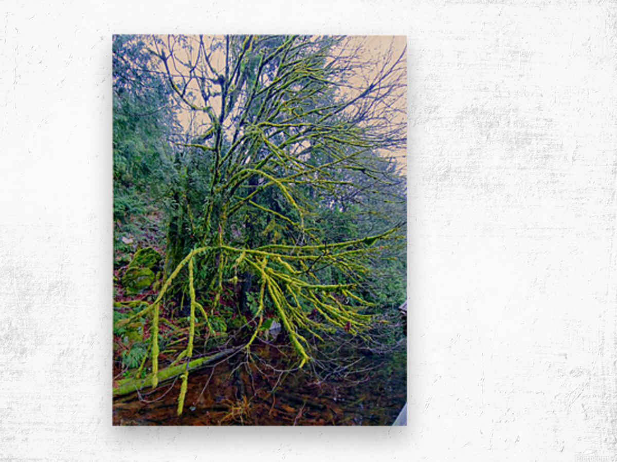 MOSSY BRANCHES Wood print