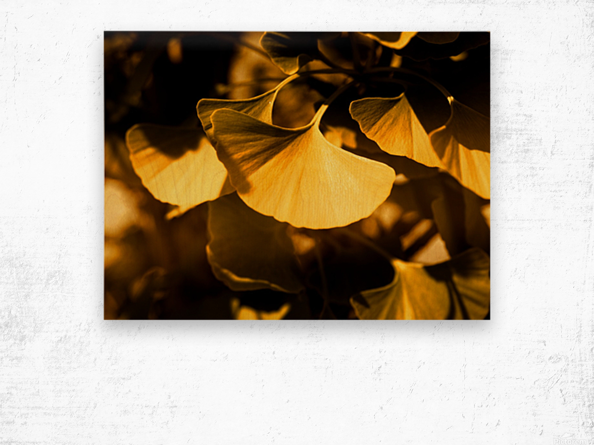 Ginkgo Wood print