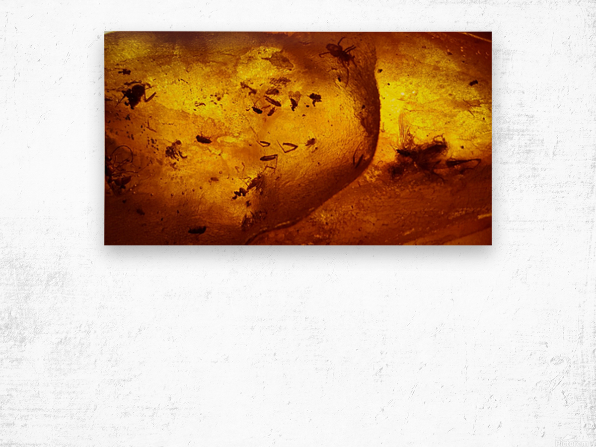 Ancient Insects Trapped in Amber Wood print