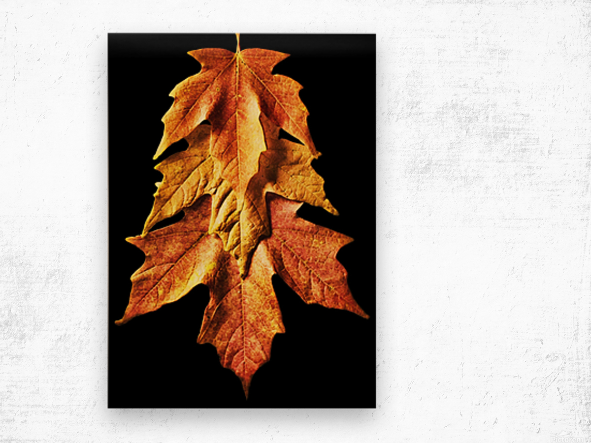 Fall Maple Leaves 1 Wood print