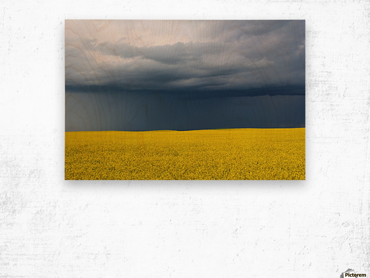 Summer Canola Wood print