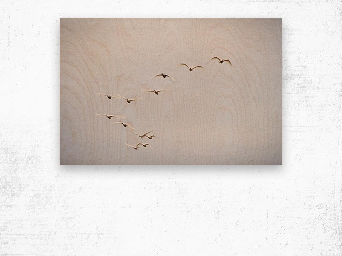 Coming In Wood print