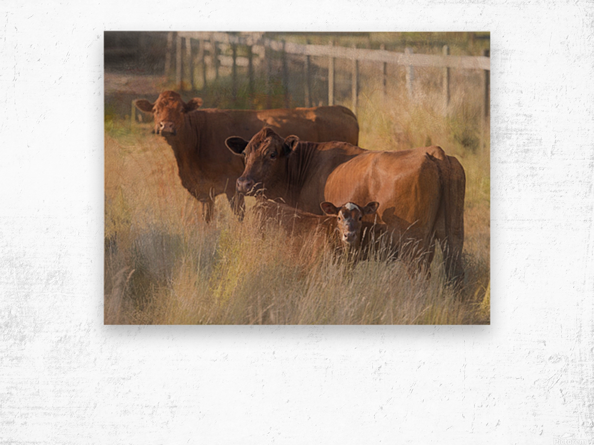 Three Cows  Wood print