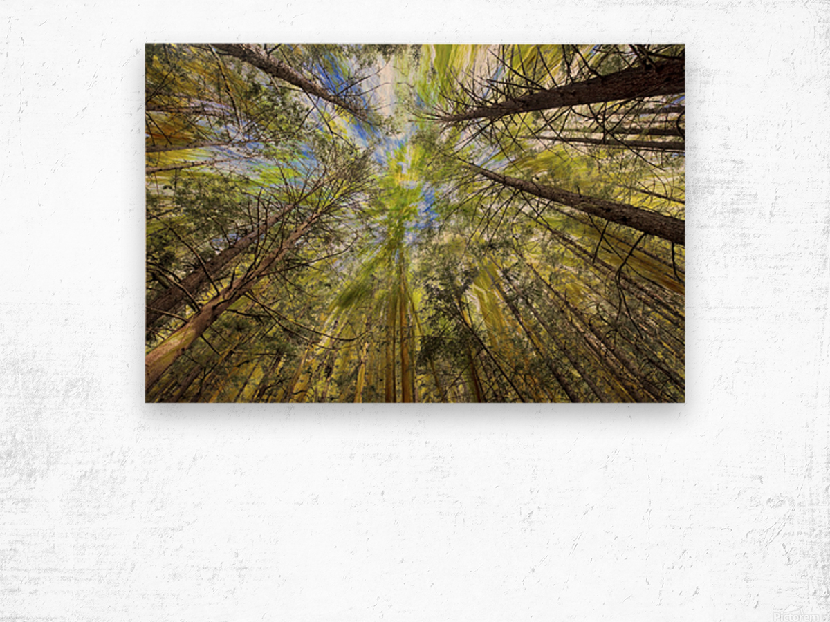 Forest Particles Wood print