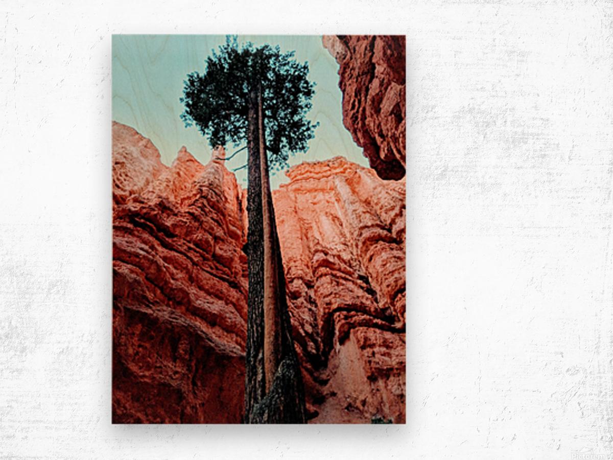 Bryce Canyon II Wood print