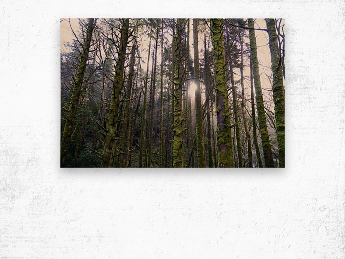 Trees of the Killarney National Park Co. kerry Ireland Europe 2018 Wood print