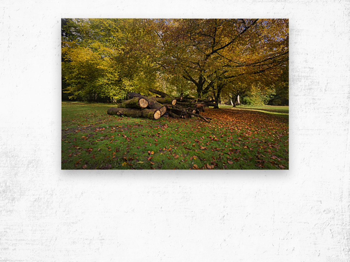 Autumn leaves and cut trees Wood print