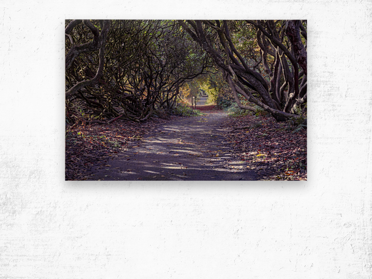 Tree lined Rhododendron walkway Wood print