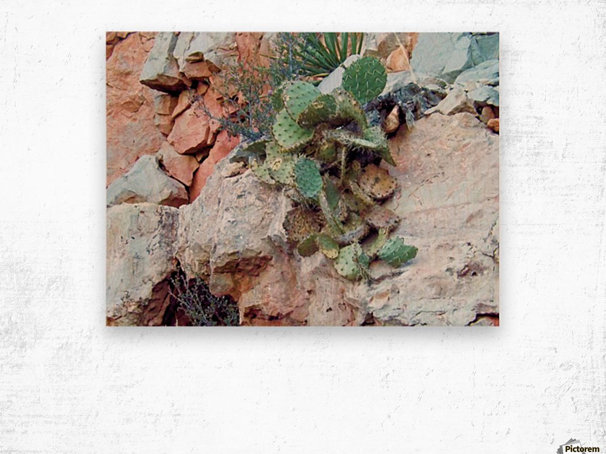 Cactus Impression sur bois