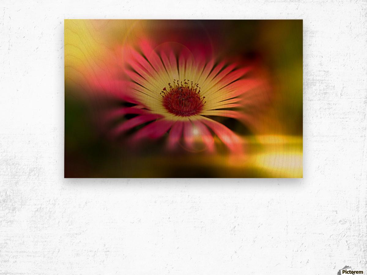 little sunshine Wood print