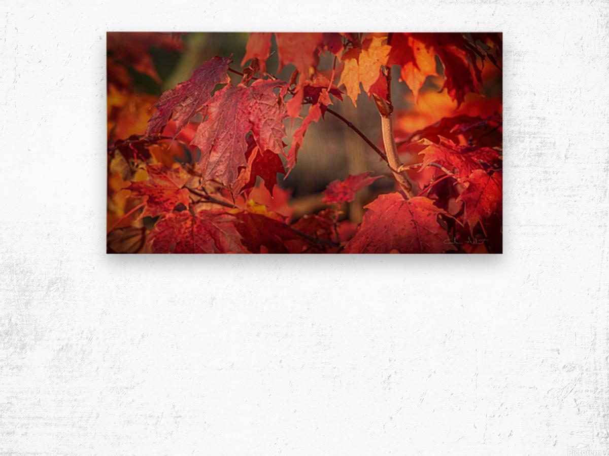 Rouge dautomne Impression sur bois