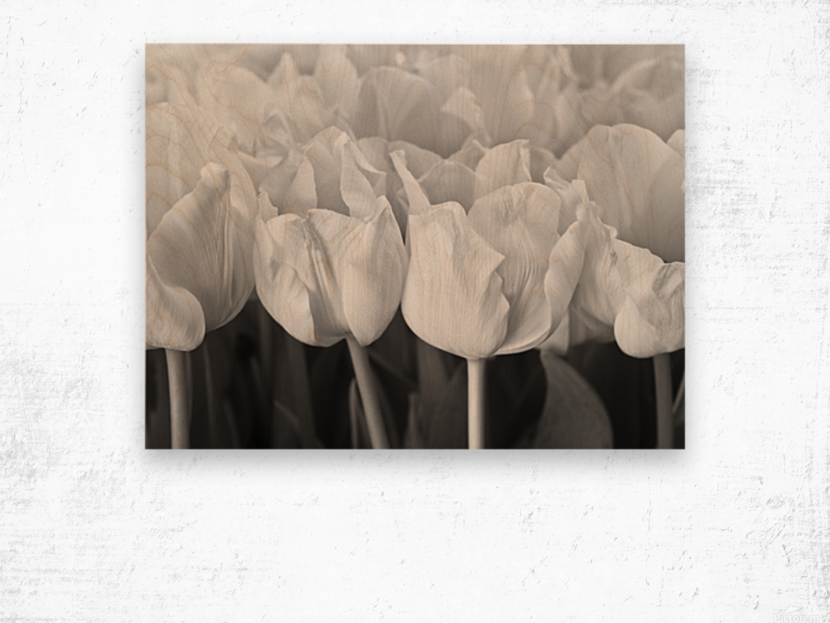 Bunch of Tulips close-up Wood print