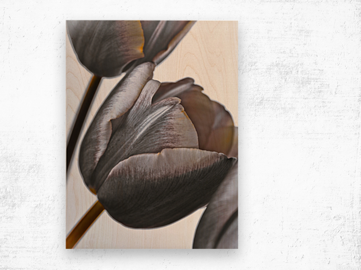 Tulip flowers on white background Wood print