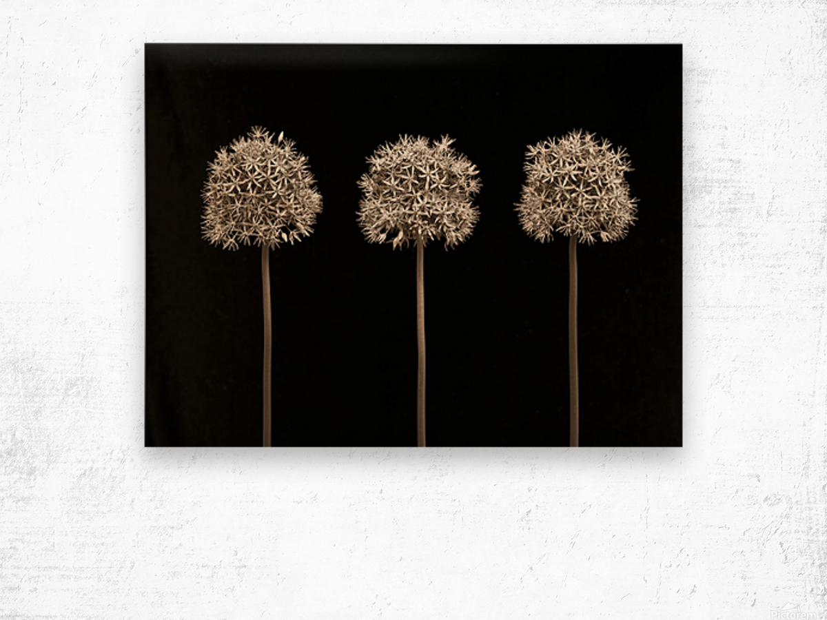 Three allium flowers Wood print