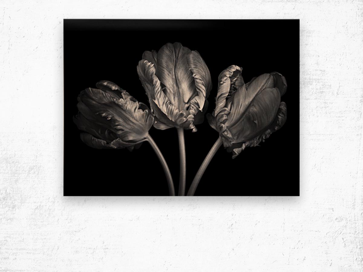 Three rococo tulips close-up Wood print