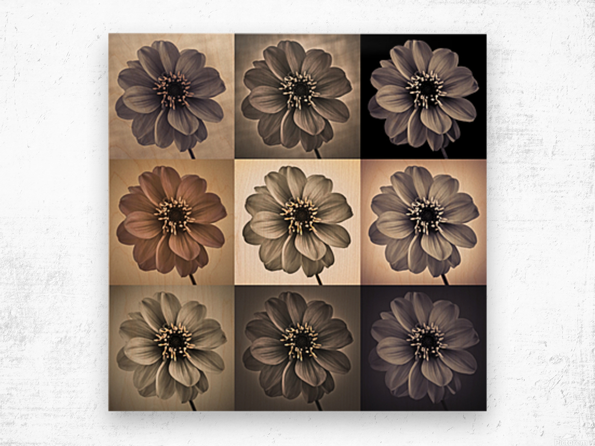 Collage of Dahlias flowers Wood print