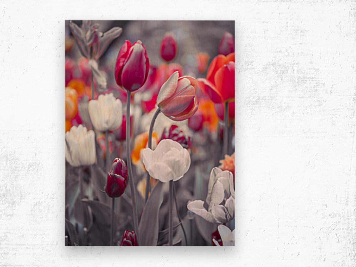 Colorful Tulip flowers Wood print