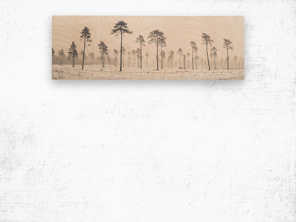 Snowy forest in winter Wood print