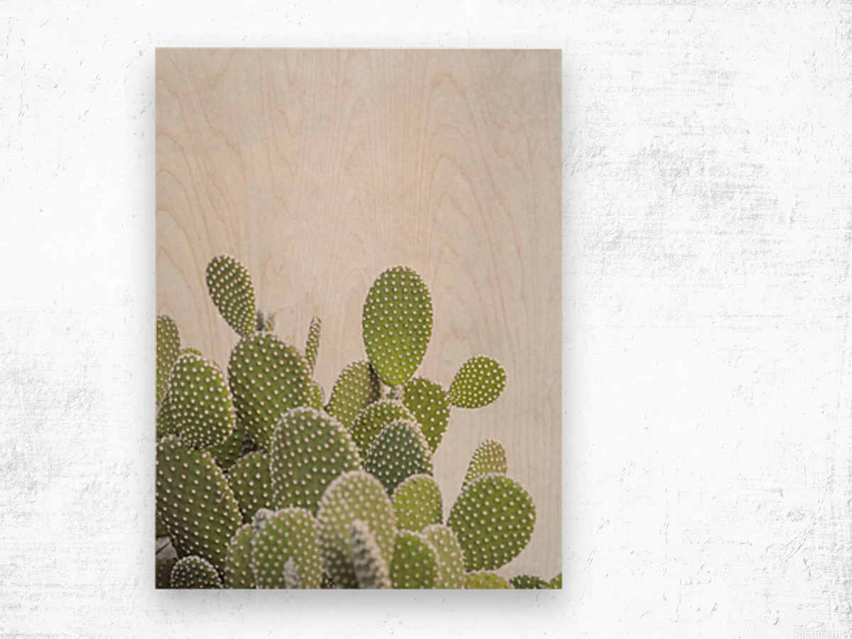 Cactus plant Wood print