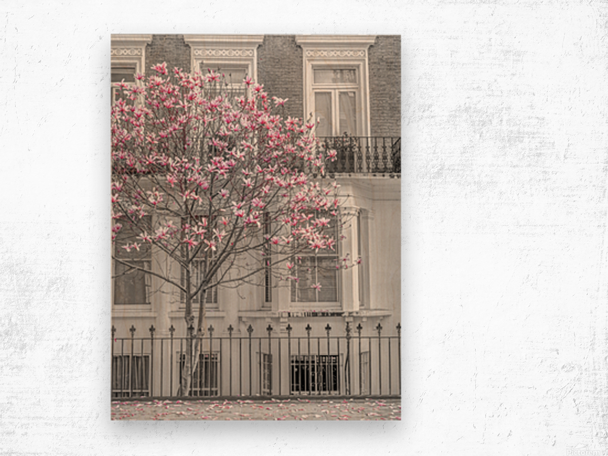 Magnolia tree outside house in London Wood print