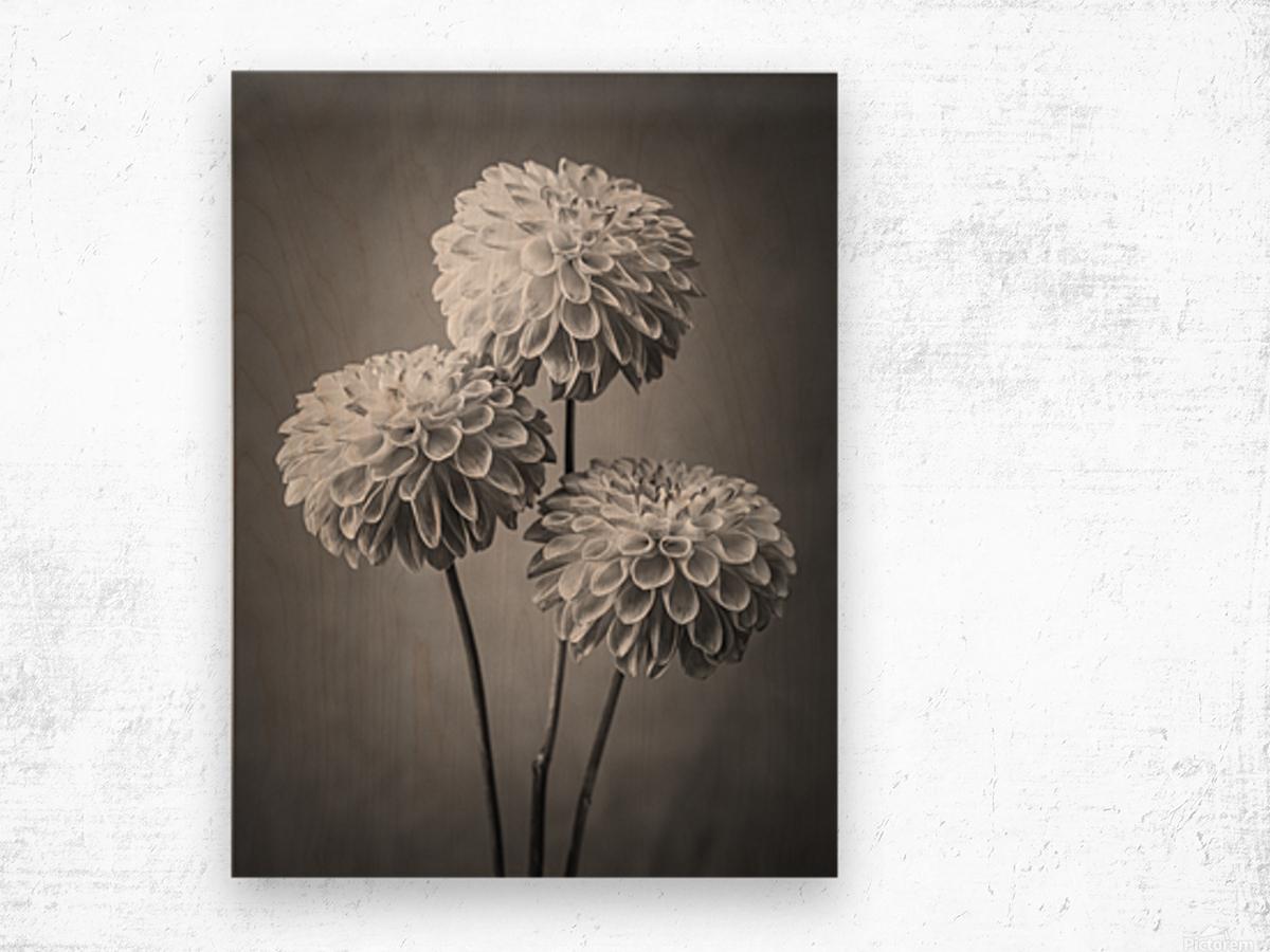 Three Dahlia flowers Wood print