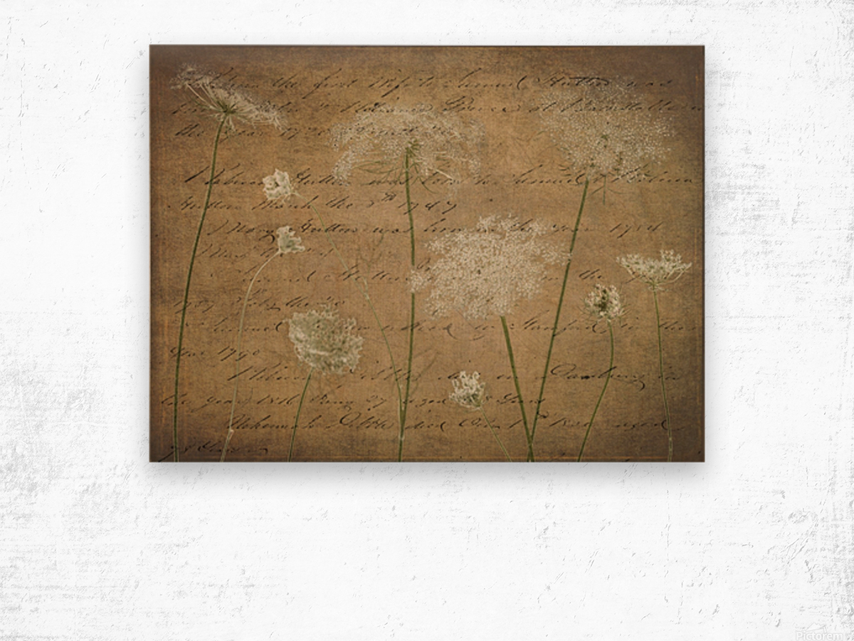Cow parsley flowers on coloured background Wood print