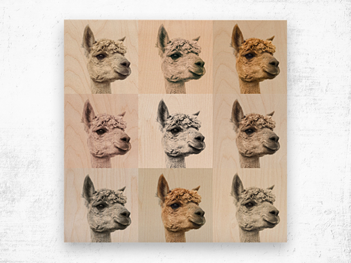 Collage of Alpacas in multicolour Wood print