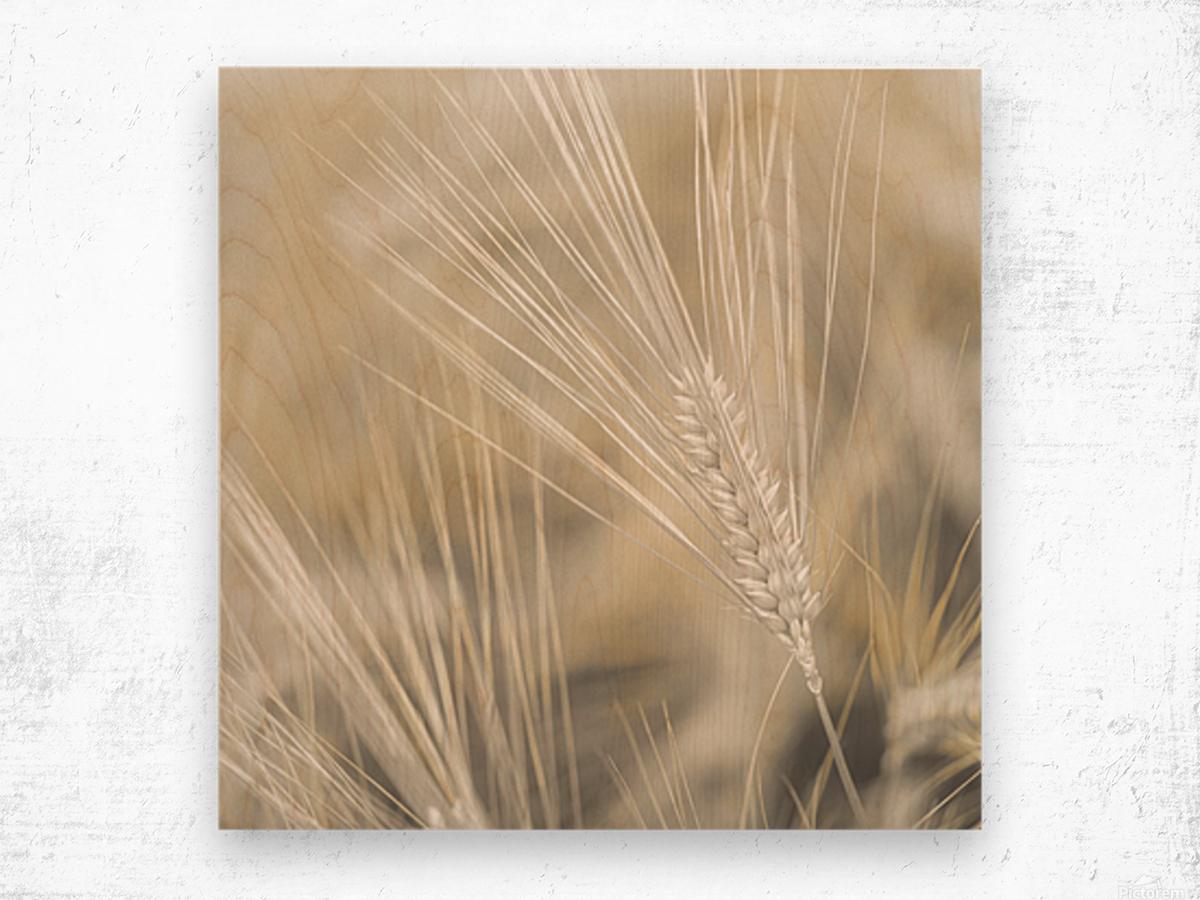 Wheat close-up Wood print