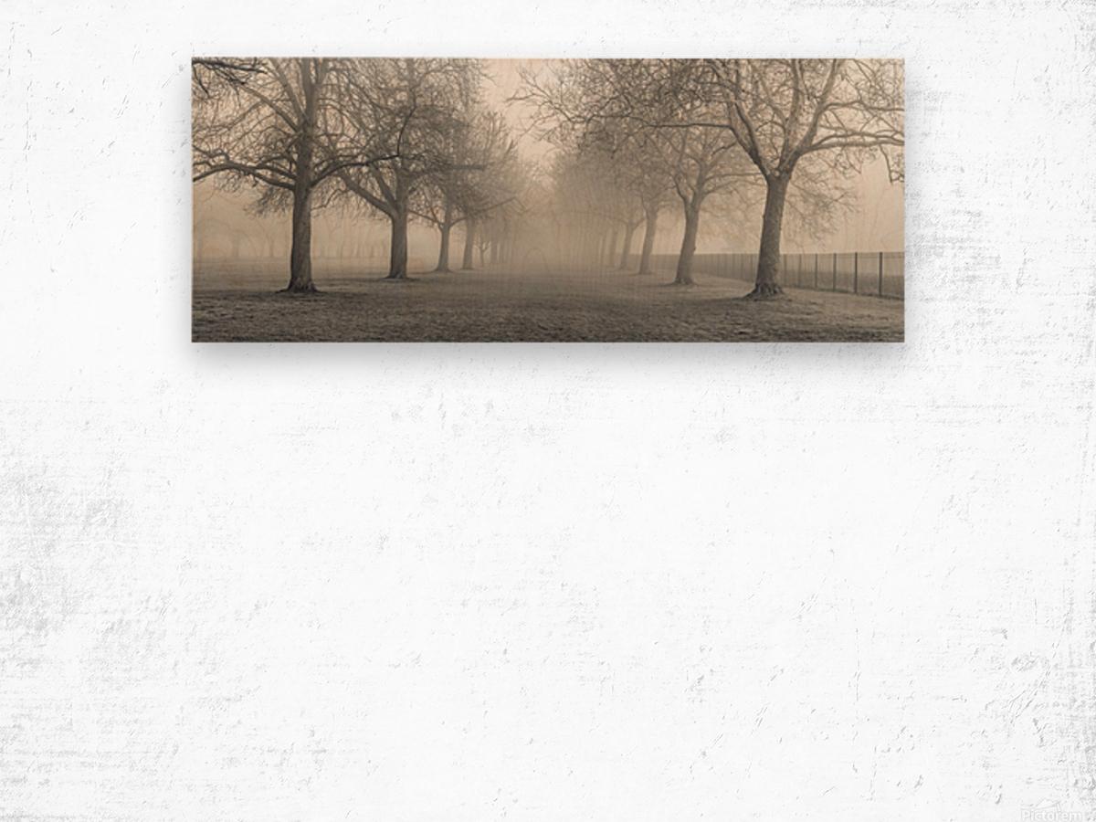 Pathway through trees Wood print