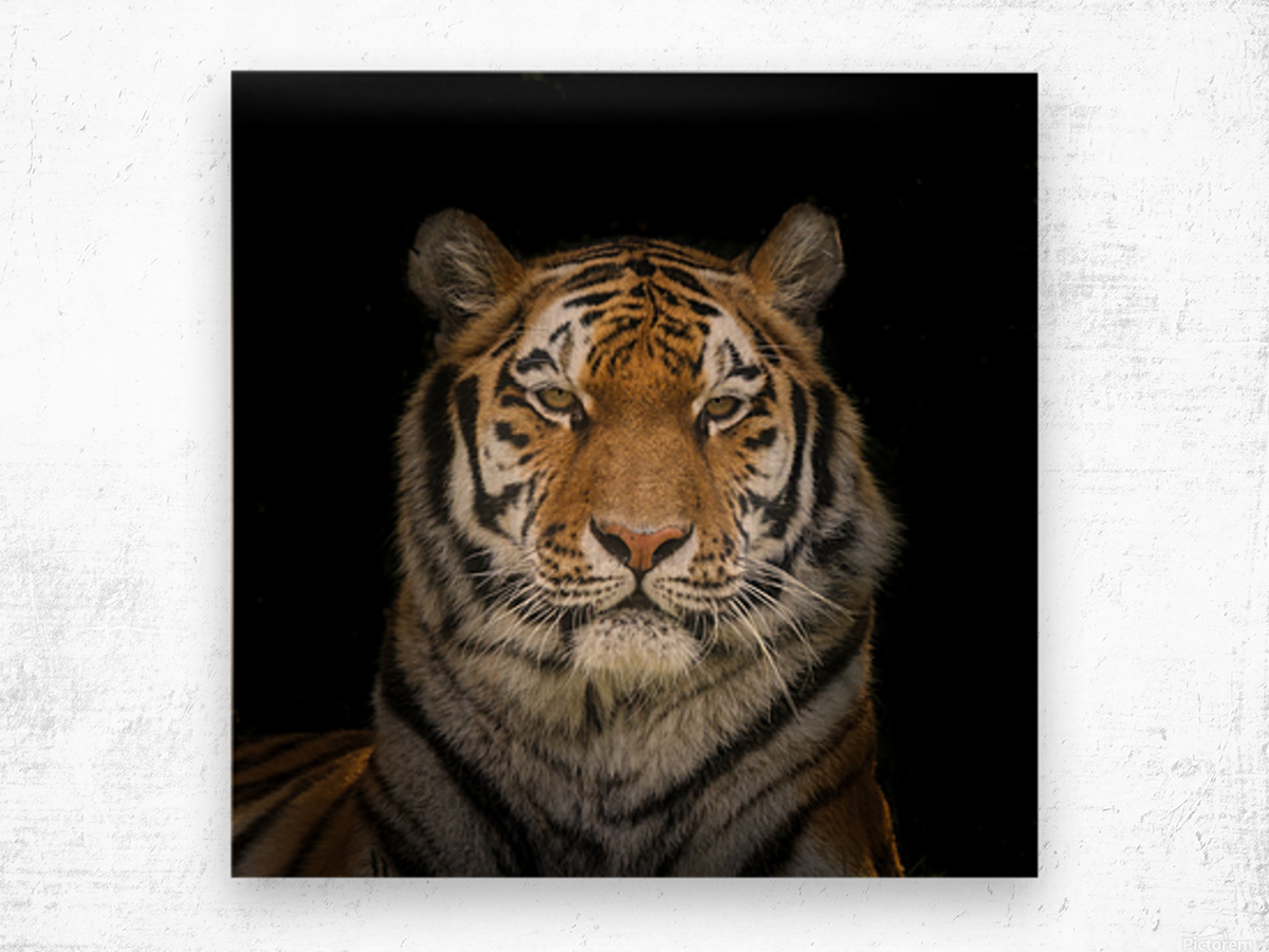 Tiger face Wood print
