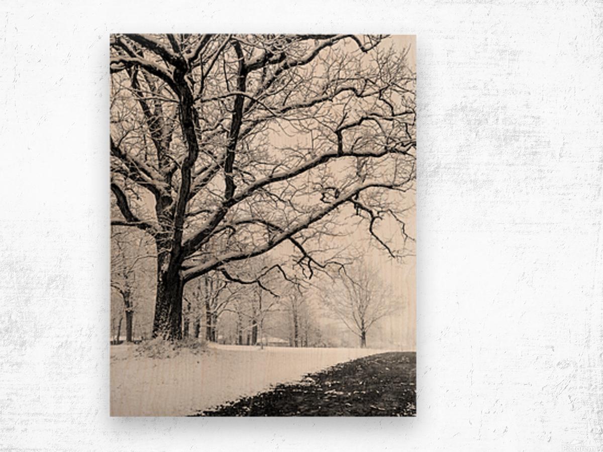 First Snowfall Wood print