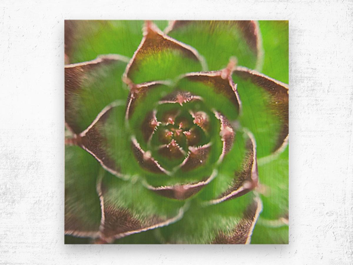 20_Green Succulent Perennial - Verte Vivace_9780_CLEAR SQUARE Wood print