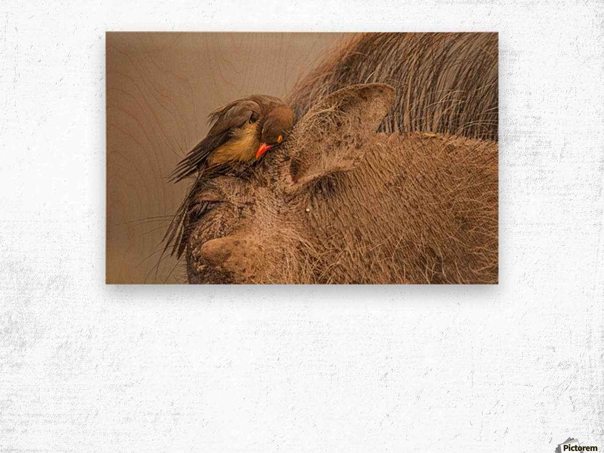 Hideaway by Jaco Marx  Wood print