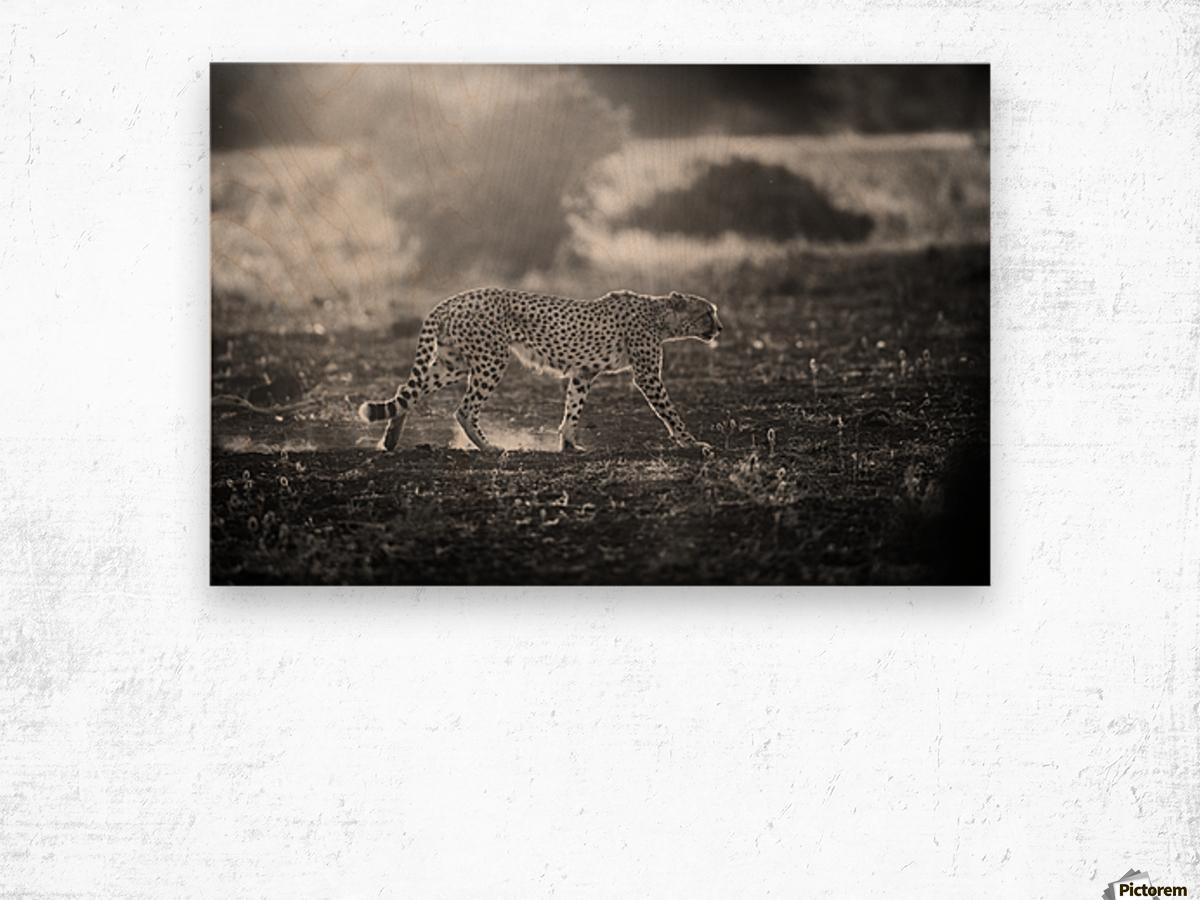 Backlit Cheetah by Jaco Marx  Wood print