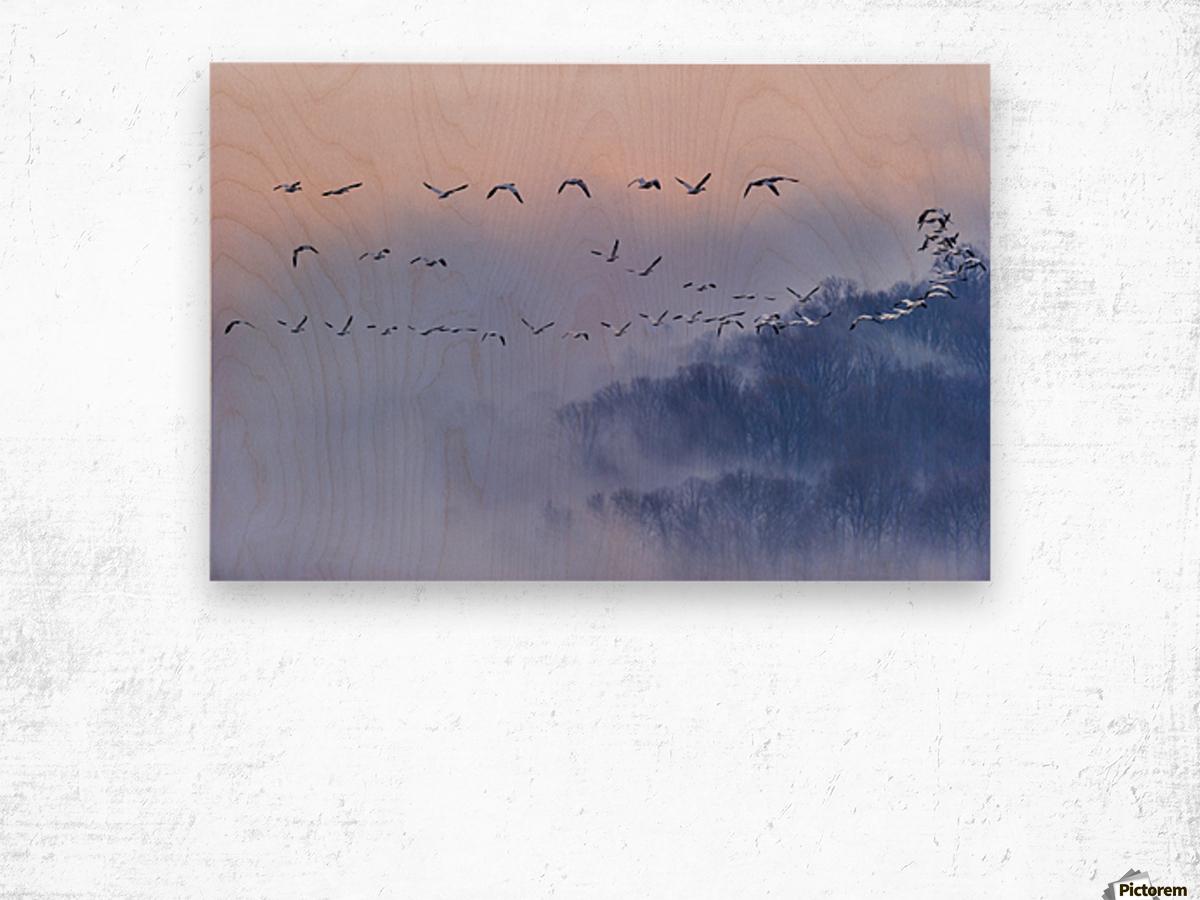 Snow Geese Wood print