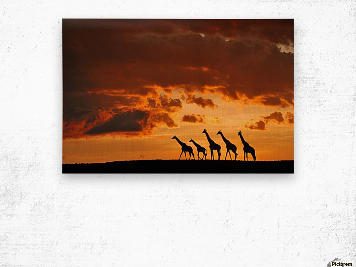 Five Giraffes Wood print