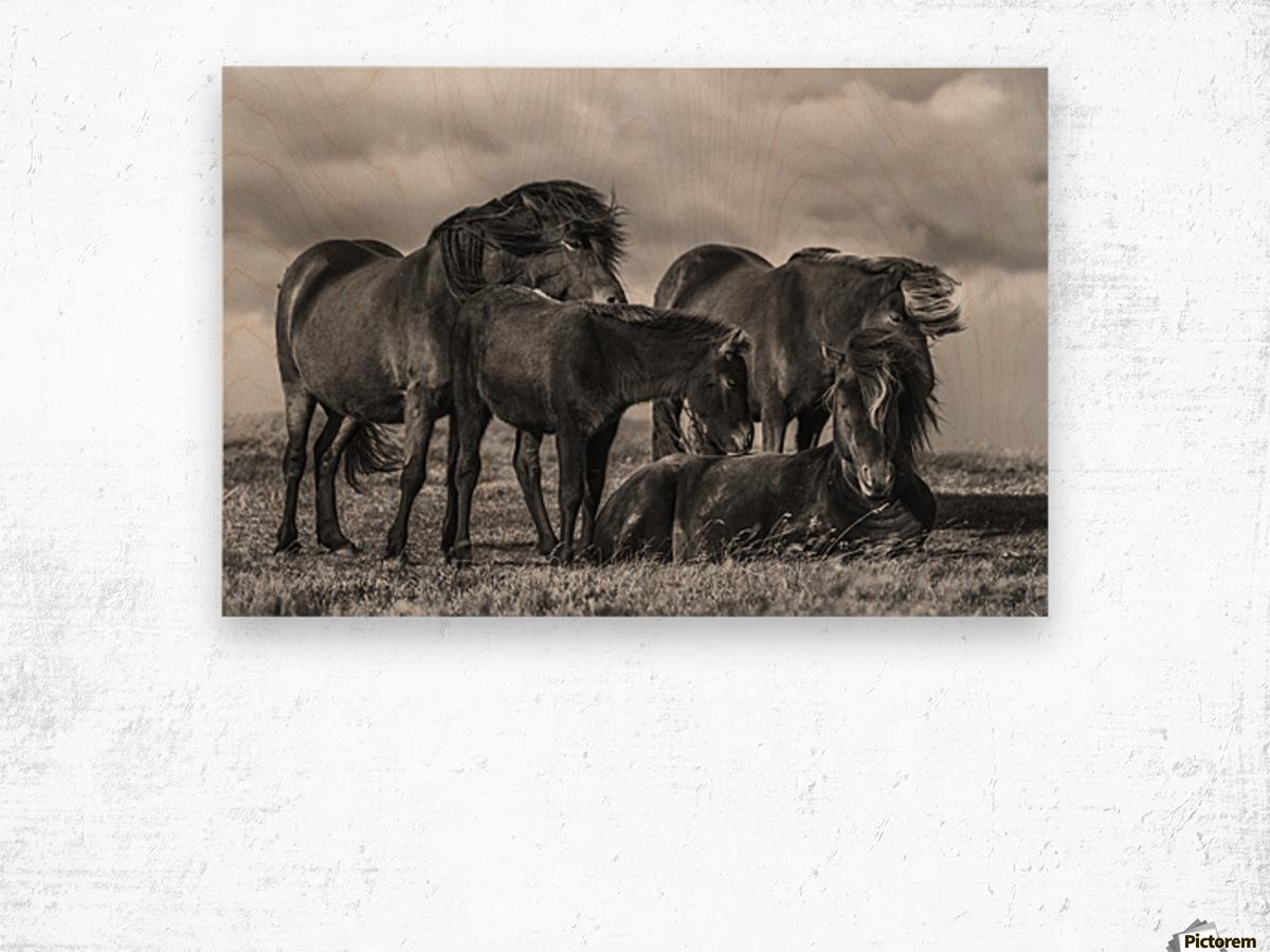 Happy Family by Bragi Ingibergsson Wood print