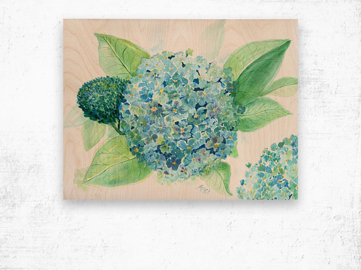 Lovely Blue Hydrangia  Wood print