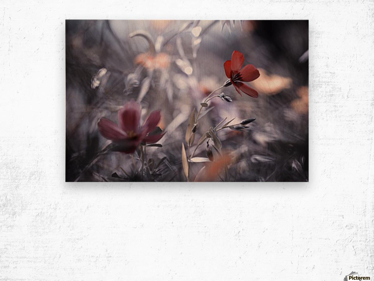 Une Fleur, une Histoire by Fabien BRAVIN  Impression sur bois