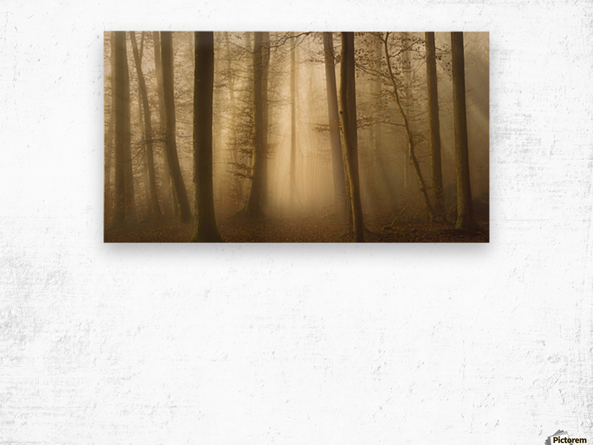 Into the Trees Wood print