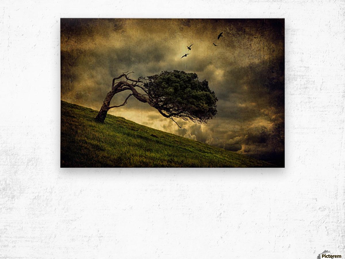Winds of Change by Peter Elgar  Wood print