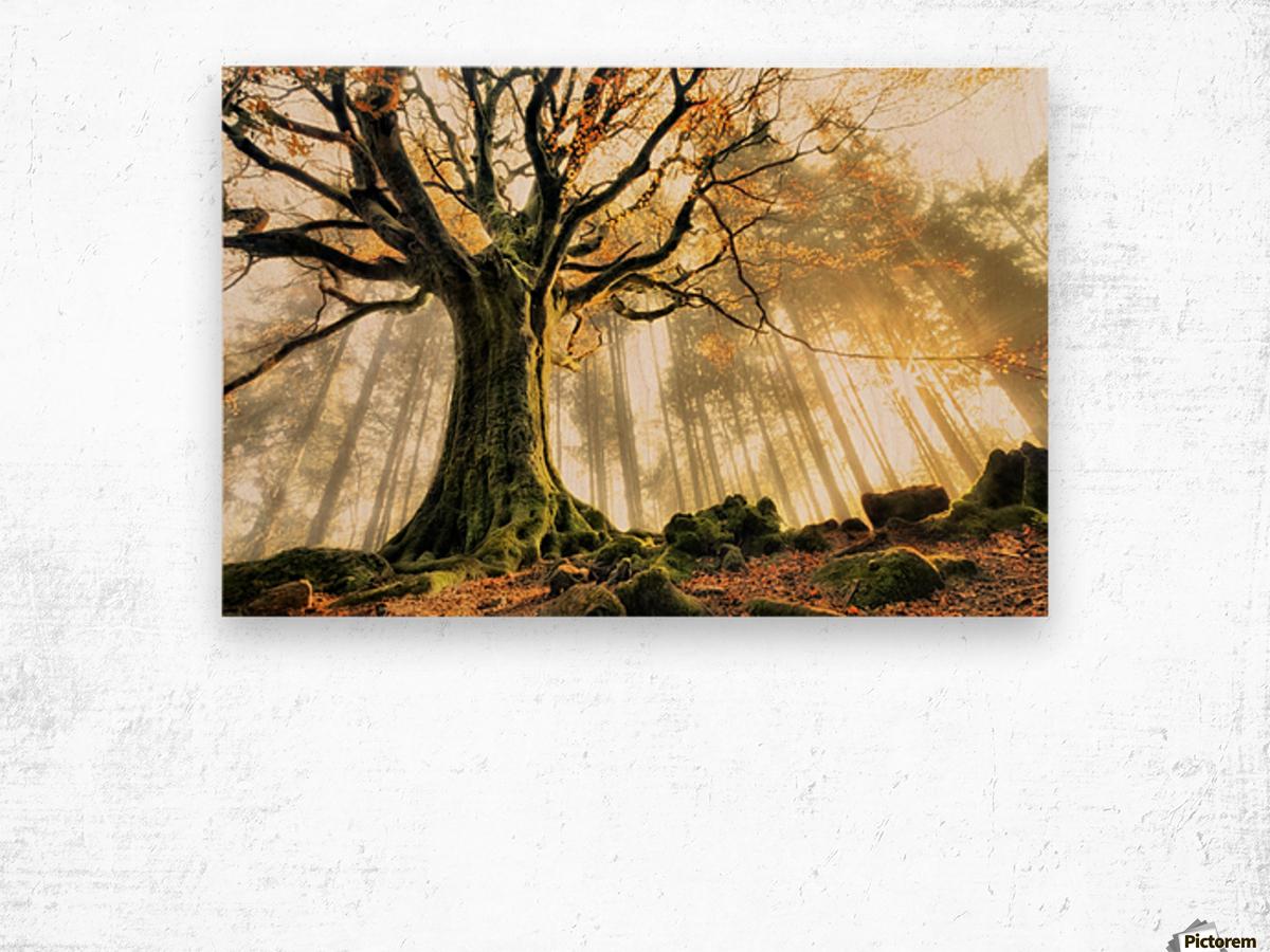 November by Christophe Kiciak  Wood print